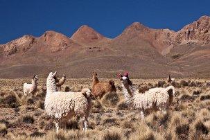 Sprachreisen Bolivien