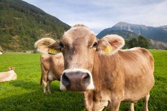 Schüler-Sprachreisen Schweiz